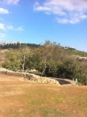 Near Shilo